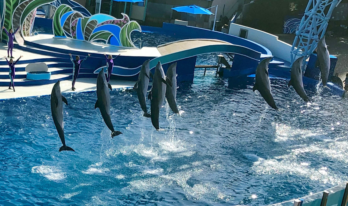Sea World Delfin Show | © Louisa Piper